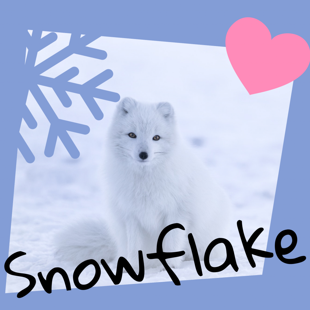 Snowflake Instagram Post Template