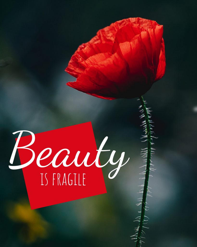 Beauty  is fragile Instagram Post Template